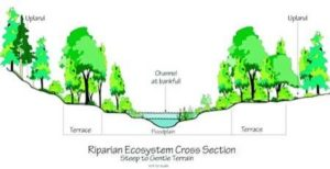 Riparian Cross Section